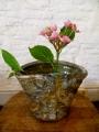 natural ash glazed vase